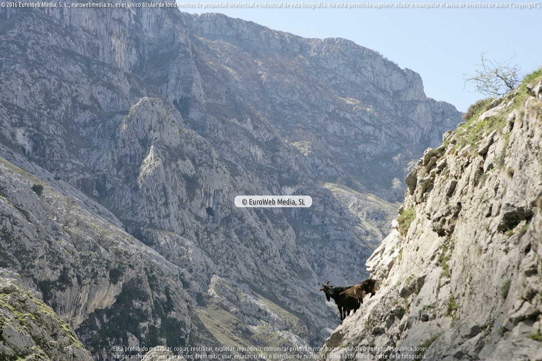 Fotografía de Camarmeña en Cabrales. Asturias. España.