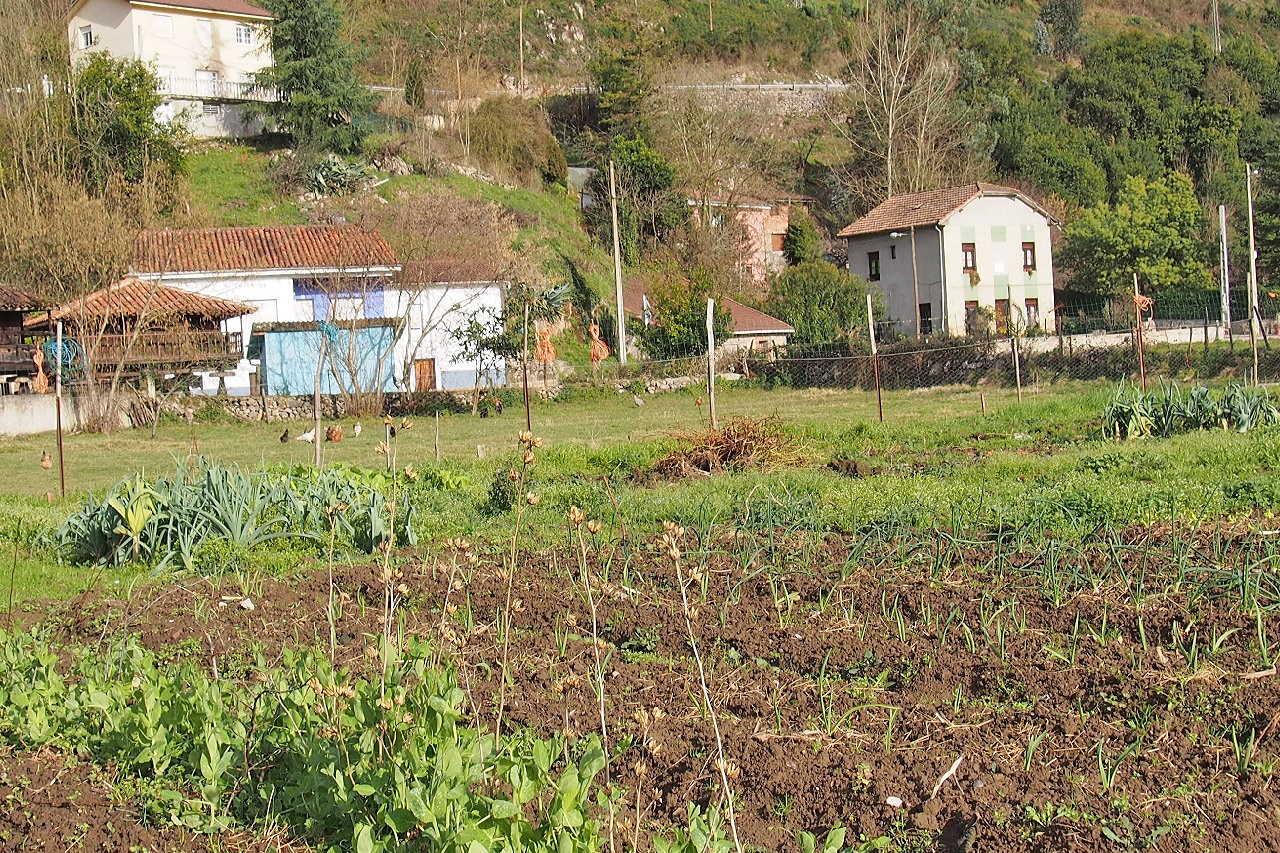 Fotografía de Bueño en Ribera de Arriba. Asturias. España.