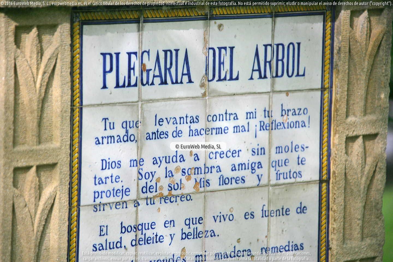 Fotografía de Plegaria del Arbol en Gijón. Asturias. España.